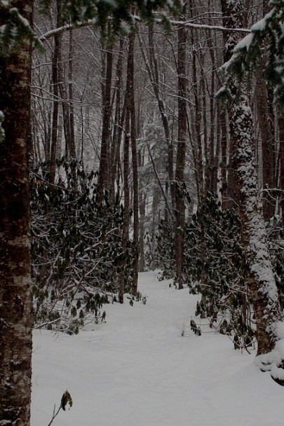 essay about stopping by woods on a snowy evening Stopping by woods on a snowy evening is a digital essay that uses the  affordances of the web to bring this robert frost poem to life in a very.