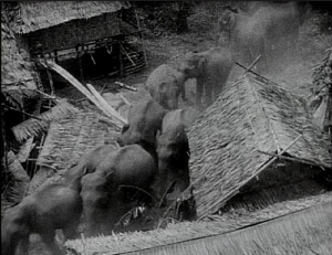 elephant stampede from Chang (1927)