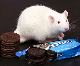 rat with Oreos