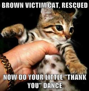 brown victim cat thank-you dance