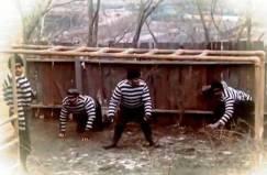 lurking traffickers