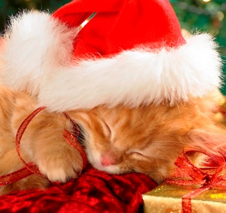 Xmas kitty sleeping