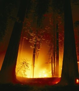 sequoia wildfire