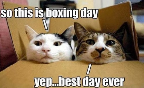 Boxing Day cats