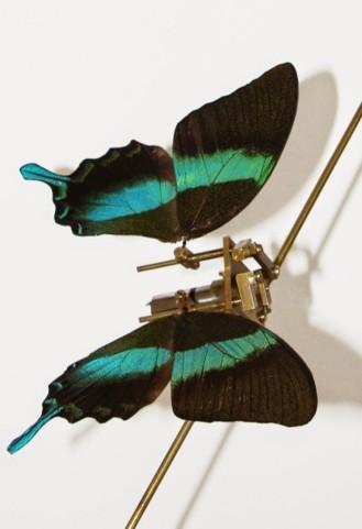 clockwork butterfly
